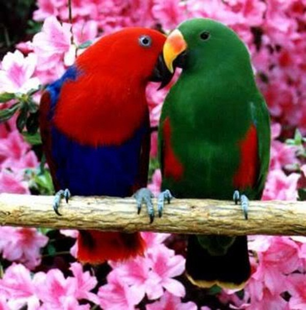 54 Love Birds Wallpaper 300