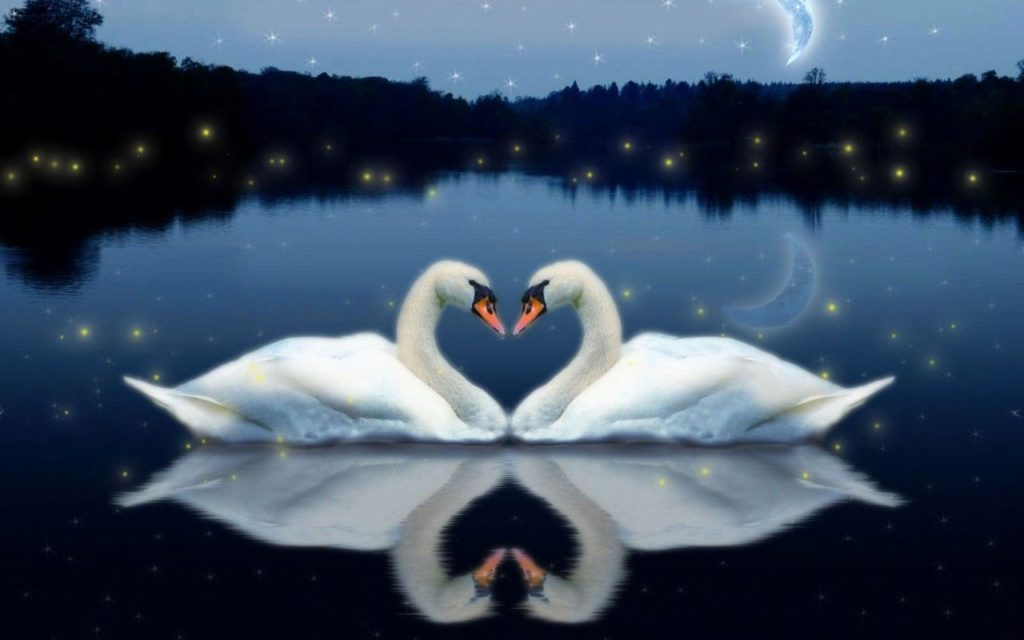 Free Love Birds Wallpaper 800